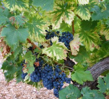 Vinissime vins francais french wines 1