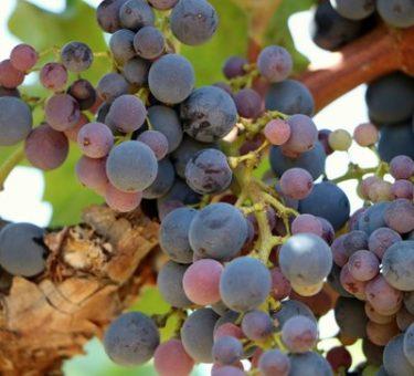 Vinissime vins francais french wines 8